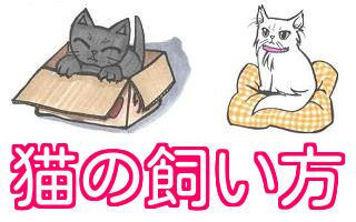 猫 飼い方